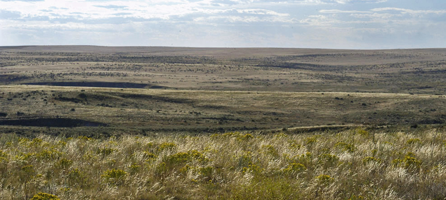Easement To Protect Lesser Prairie Chickens in Kansas' Shortgrass Prairie