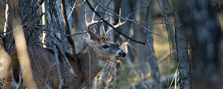 DEER SEASON DEBUTS WITH ARCHERY AND MUZZLELOADER