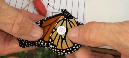 Soar Over to KWEC's Butterfly Festival