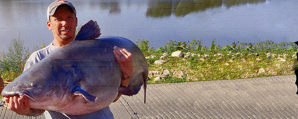Monster blue catfish certified as kansas record news 9 for Kansas fish records