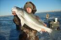 Glen Elder Striper