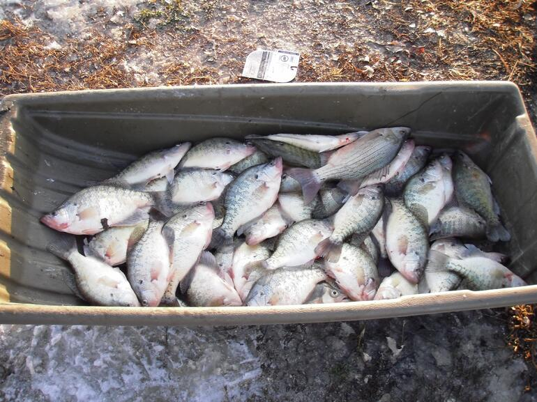 Sled of Crappie