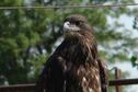 Baby Eagle at Rockin'K Horse Campground